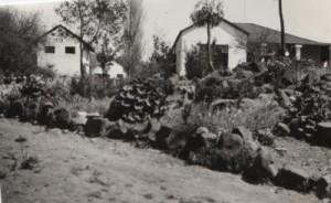 Boskop Farm 1954