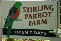 rutte_parrot-farm